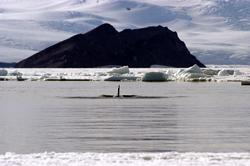 Ross Sea Antarctica