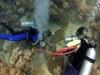 coring coral