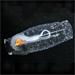 Changes in the Antarctic Ecosystem: Salps versus Krill