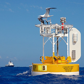 A booby flies by and checks out the WHOI Hawaii Ocean Time-series Station (WHOTS III) shortly after researchers and technicians deployed it off of Hawaii in June 2006