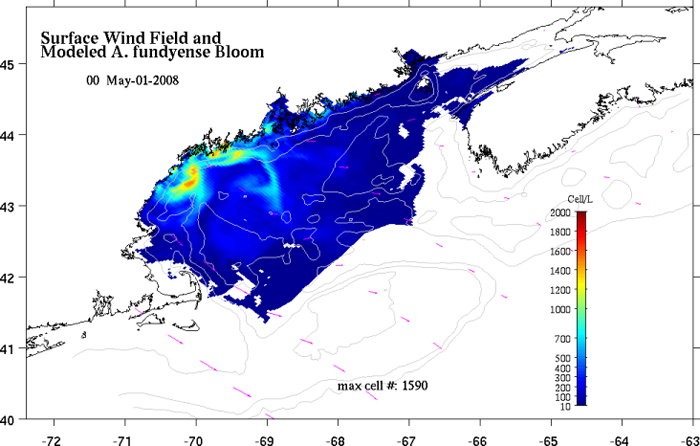 A near-real-time quasi-operational forecast of A. fundyense cells in the Gulf of Maine.