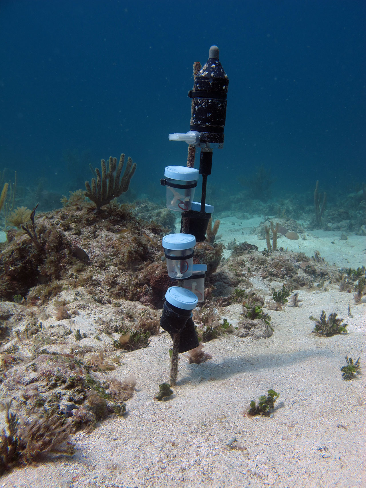 House Settling Noises: Coral Larvae Use Sound To Find A Home On The Reef : Woods