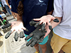 Muddy hands on R/V Tioga
