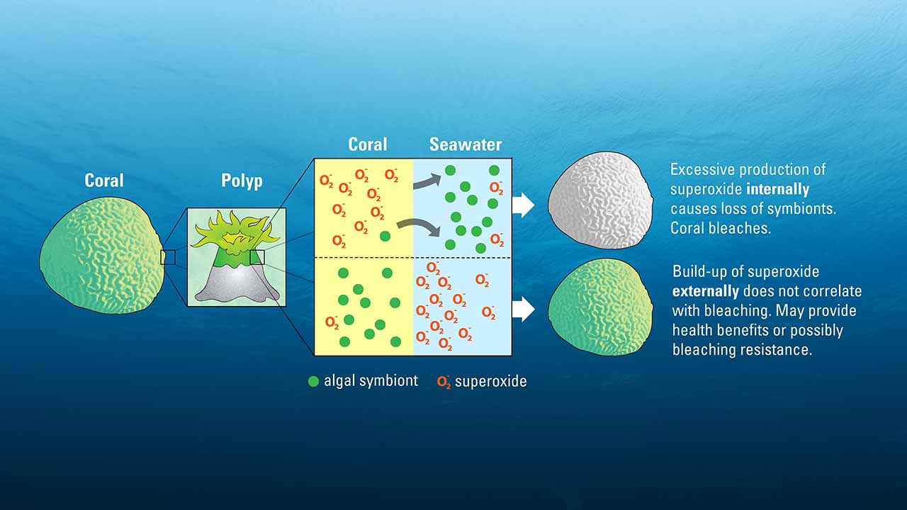 how to fix coral bleaching