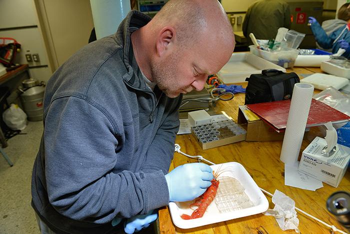 Tim Shank examines big hadal shrimp
