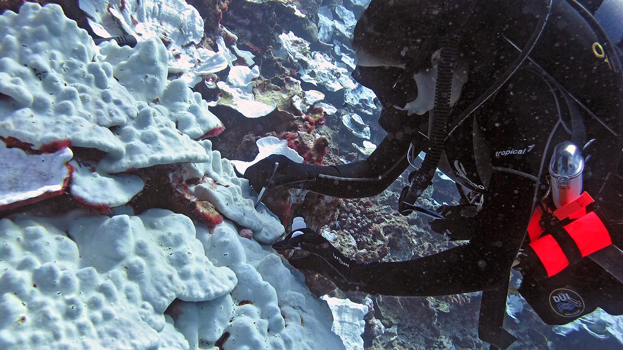 Coral sampling