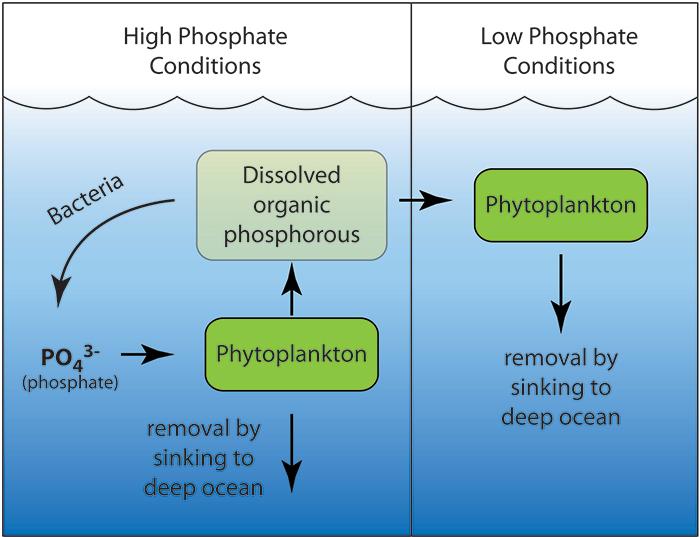 Low Phosphate Marine Fish Food
