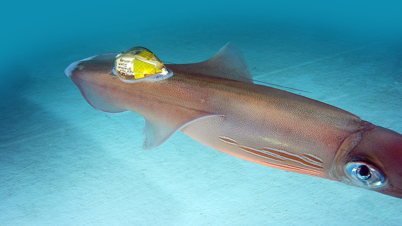 data logging tag on squid