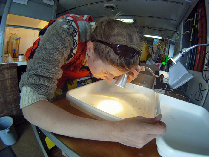 Picking pteropods