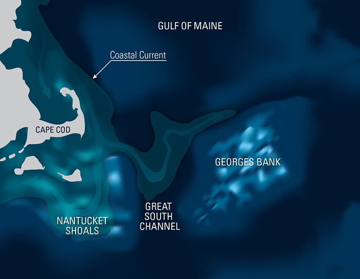 diagram of how copepods aggregate in the Great South Channel