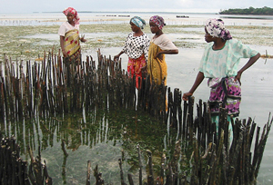 Women from Unguja Ukuu-Tindini on the island of Zanzibar off Tanzania examine a shellfish farm that they are learning to set up and tend. Hauke Kite-Powell, a Marine Policy Center research specialist, is working with scientists, fishers, and non-profit groups to promote aquaculture as an ecologically sound way to increase the yield of seafood protein for food, while also providing jobs and a saleable commodity for the villagers.