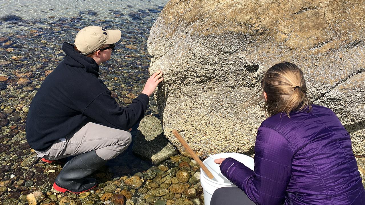 students examine intertidal zonation of barnacles