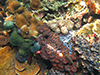Corals and acidification