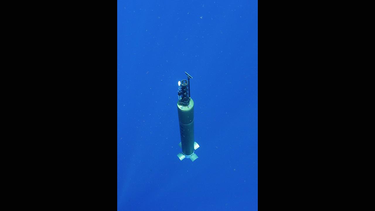 ALAMO float
