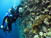 Kelton McMahon scuba diving by big coral reef
