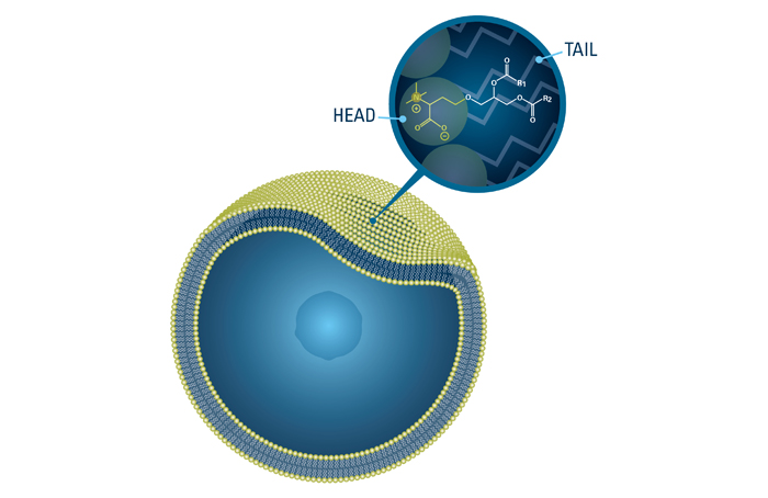 Marine cell membranes