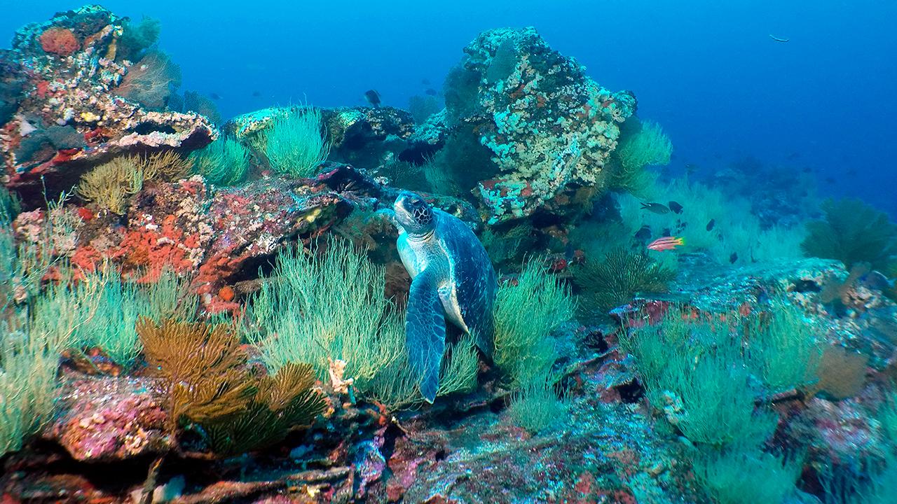 Galapagos undersea landscape