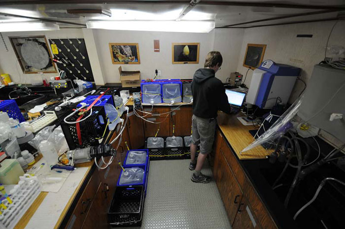 The lab space on R/V KOK has been configured to do many things and to remain safe in heavy weather. This corner is devoted to both processing water samples, which are lashed to the counter and floor, for cesium analysis and to Jarvis CaffreyÂ's station radiation monitoring station.