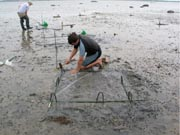 shellfish bed