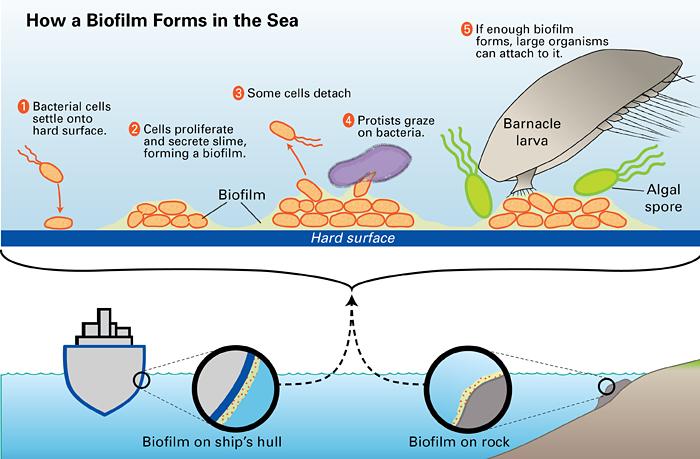 Reducing bioflims