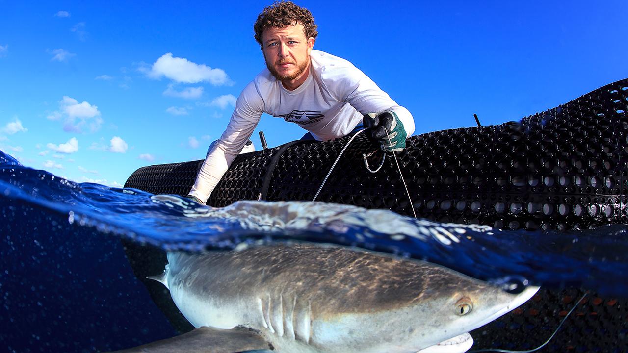 Graduate student Camrin Braun tags shark