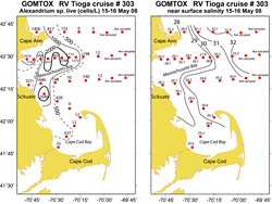 Alexandrium surface live counts (left panel), R/V Tioga May 15-16, 2008, and near surface salinity (right panel)
