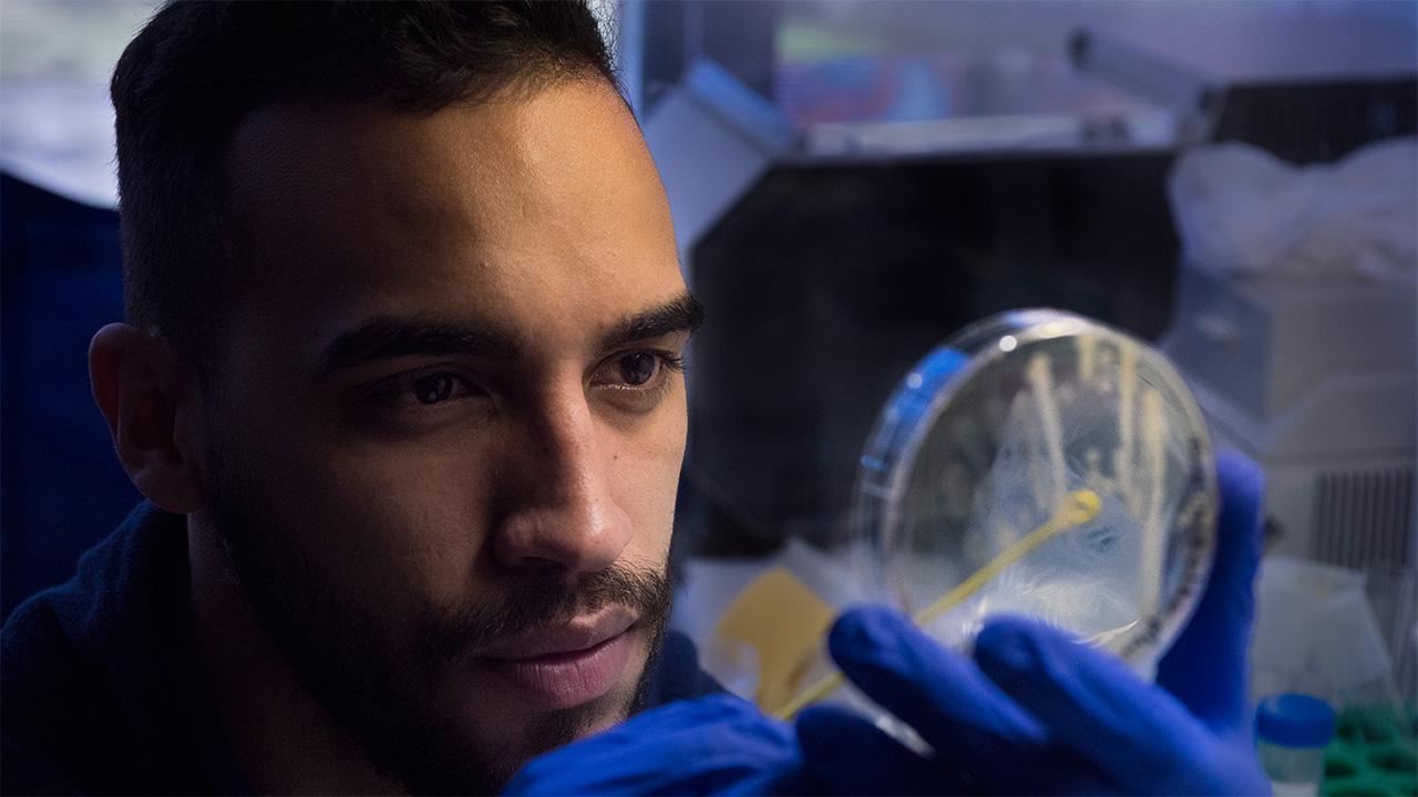 Luis Valentin-Alvarado examines a petri dish for bacteria.