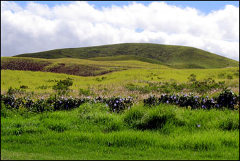 grassy foothills of the now dormant Mauna Kea Volcano