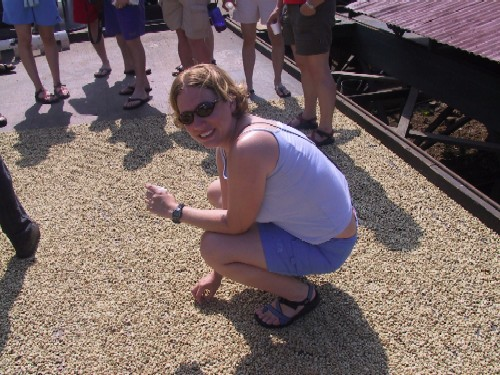 Anna Michel gets a closer look at coffee beans being dried in the sun near Captain Cook, HI.