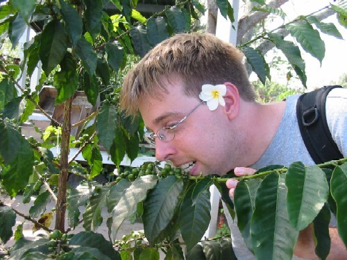 Cory Pettijohn tries to get his caffeine fix organically by chomping on green beans growing on a coffee plant.