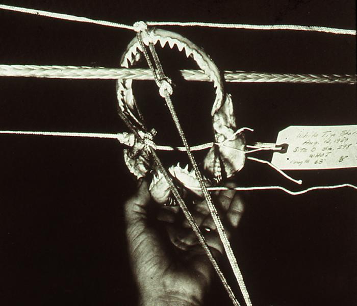 shark jaws used to cut mooring rope