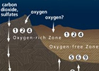 Microbial Life Below the Seafloor