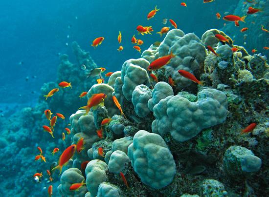 lots of reef fish