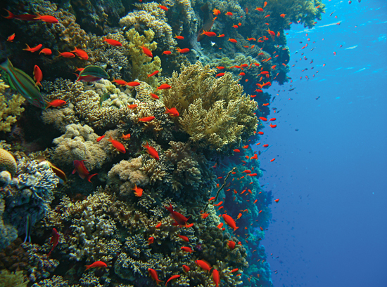 coral reef side wall