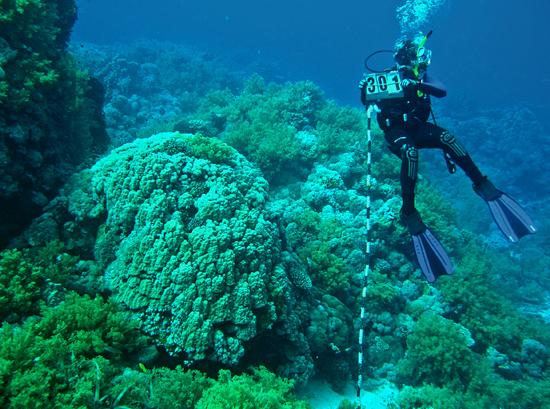 diver measuring coral