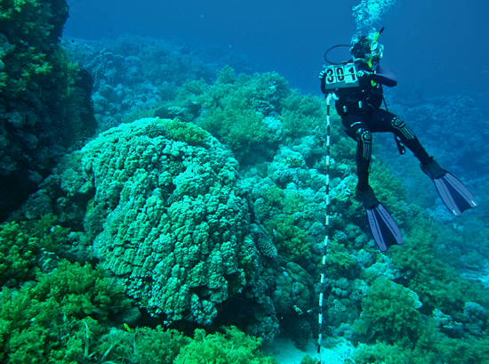 coral measurements by WHOI scientists