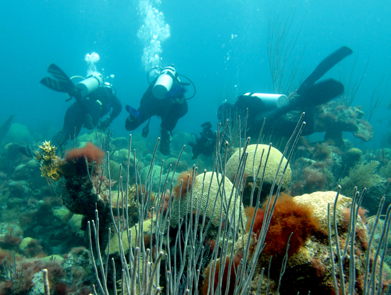 Anne Cohen and Neal Cantin filming BBC documentary on coral reefs