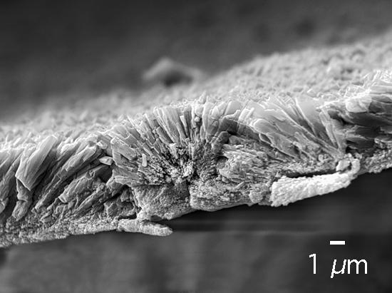 Porites coral crystals