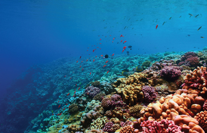 Coral reef in Micronesia