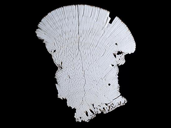 coral slice