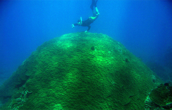 massive coral in Vietnam