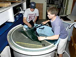 transfer a bluefish from a holding tank to a water-filled plastic bag