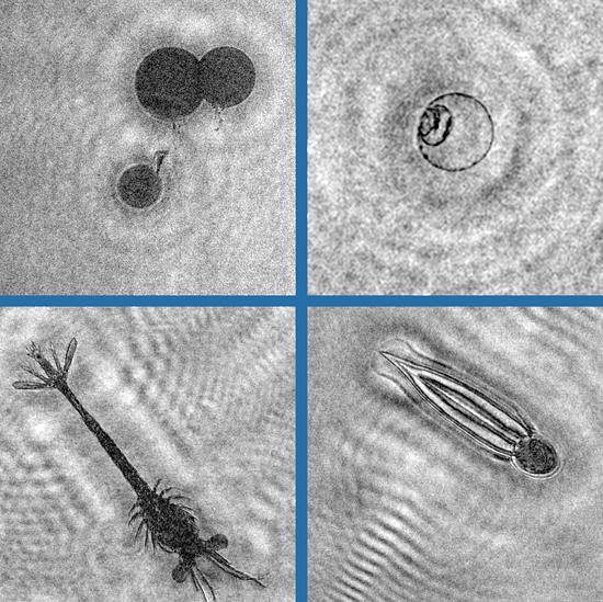 oil drops, plankton drops