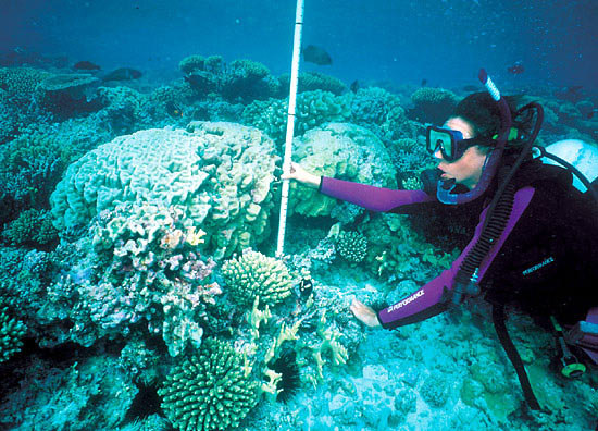 Anne Cohen sizes up a Pavona coral on Johnston Atoll