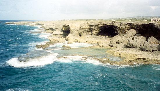 Fossil coral deposits - Barbados