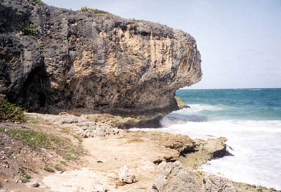 Fossil coral deposits - Barbados
