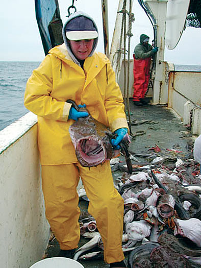 monkfish caught during a research survey
