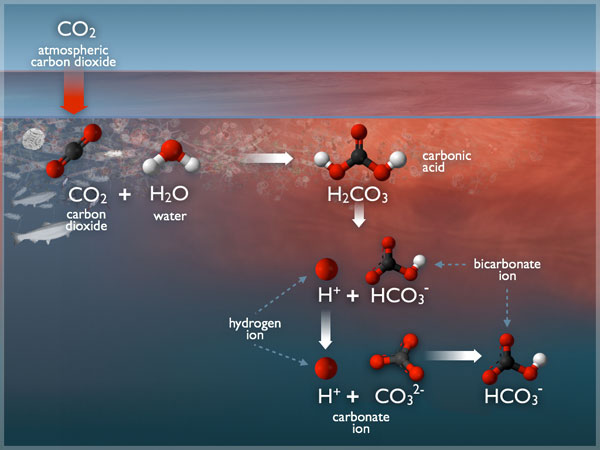Ocean Acidification | Grade 12U Chemistry-Systems and Equilibrium