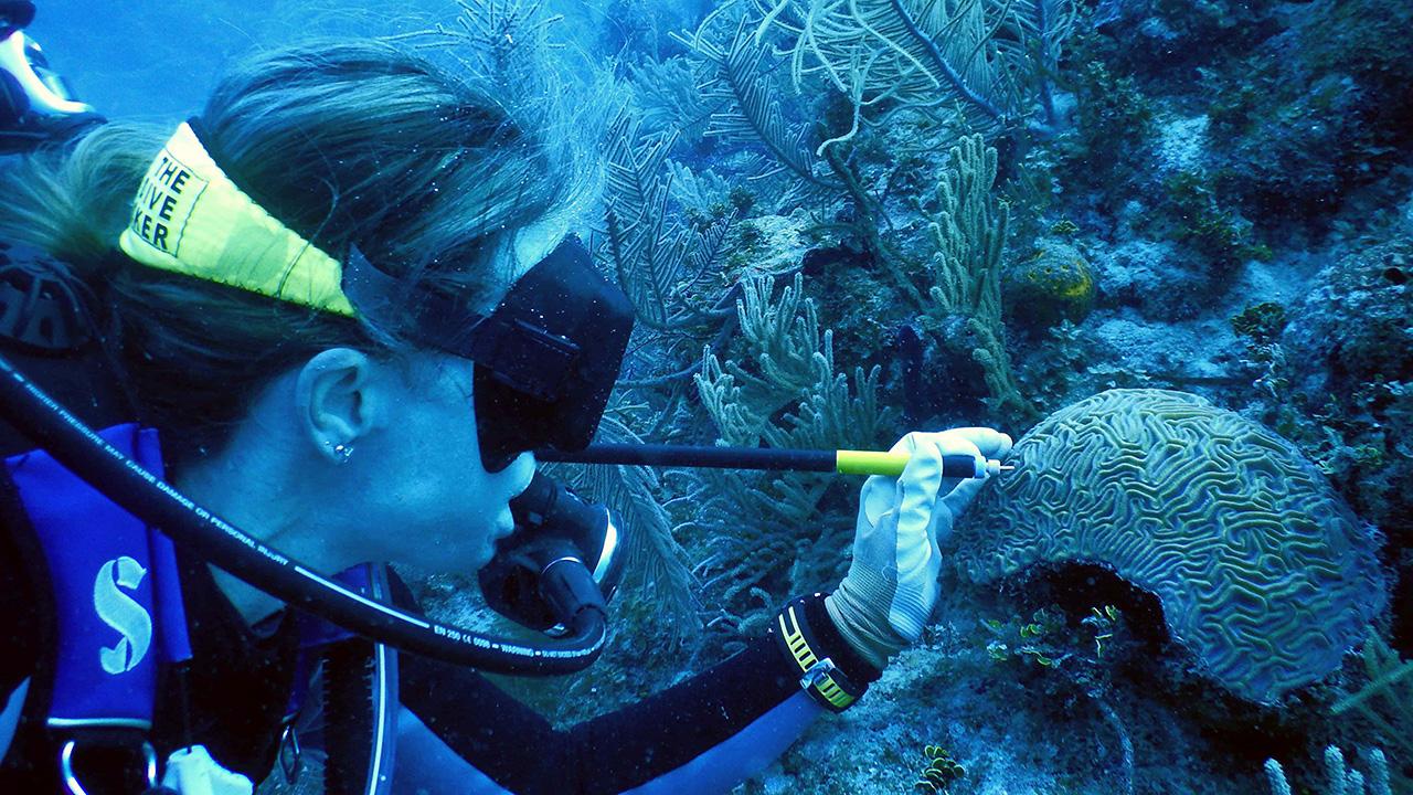 Coral testing