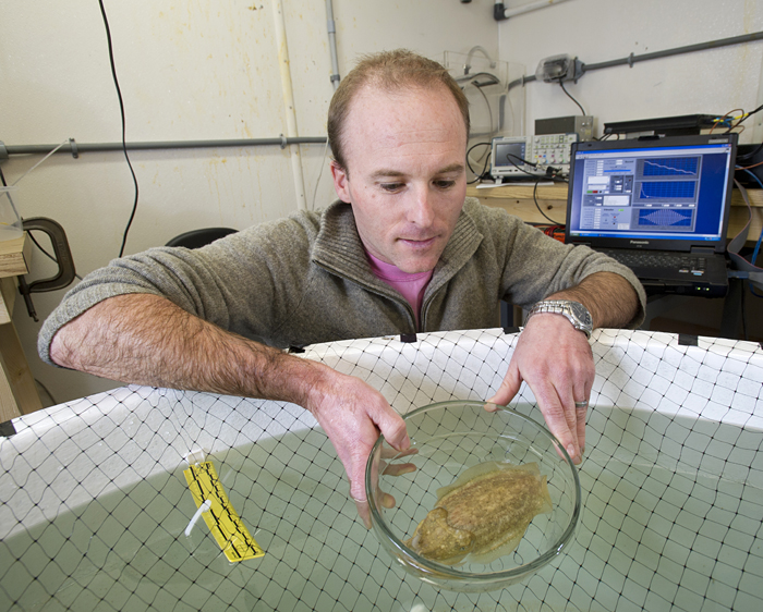 WHOI biologist T. Aran Mooney places a cuttlefish, a close relative of squid, into a tank prior to testing how it responds to various sounds.